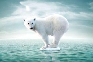 белый медведь, глобальное потепление
