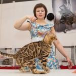 выставка кошек. Рязань