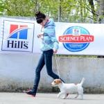 выставка собак, Новороссийск