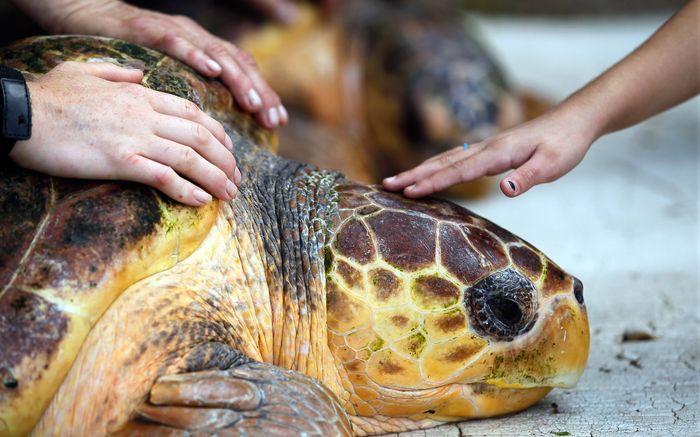 ловить черепах