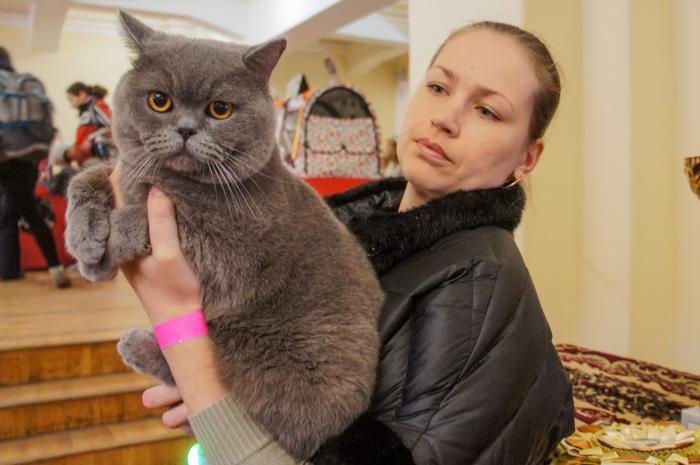 донские сфинксы была представлена на международной выставке кошек FIFe в Ростове-на-Дону.