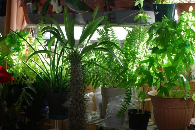 поющие растения