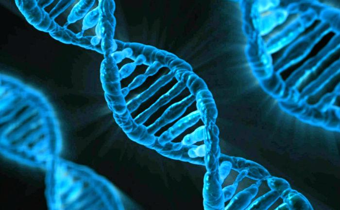 ДНК, молекула, гены, геном