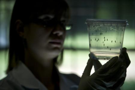 Вирус Зика выявлен в Бразилии