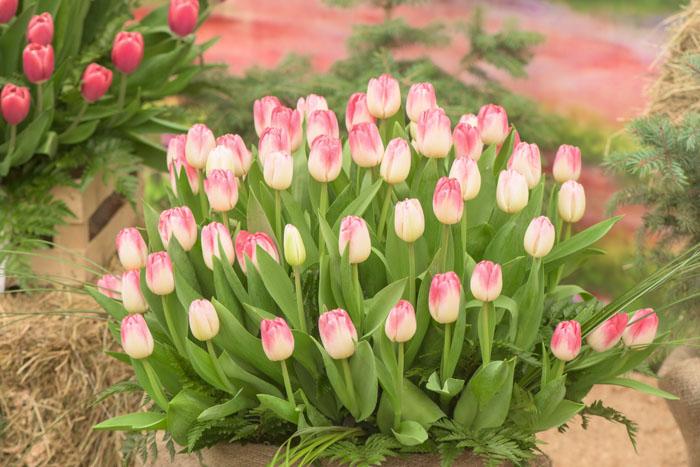 красота цветов