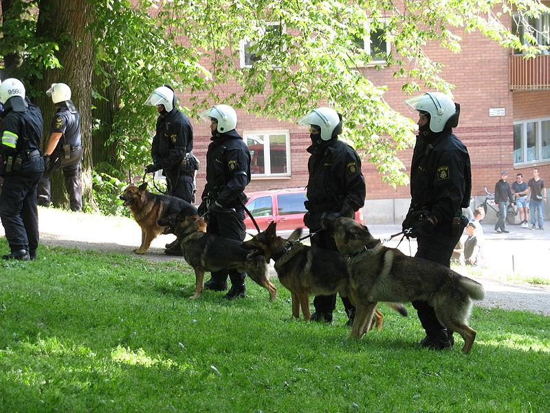 Полицейские с собаками