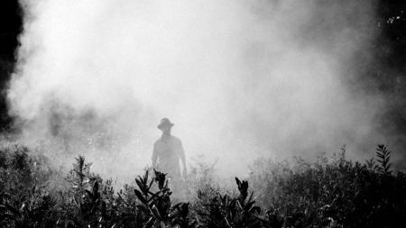 пестициды, вред пестицидов