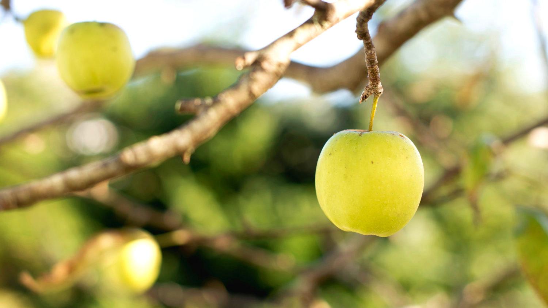 яблоко, фрукты, пектин
