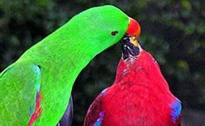 Птицы могут различать больше цветов, чем люди