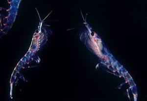 В Антарктике найден живой организм на глубине 3 000 метров