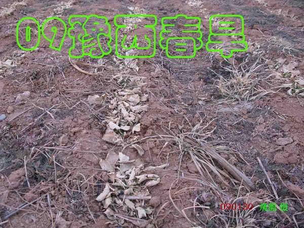 Фотообзор: Китай охватила небывалая засуха