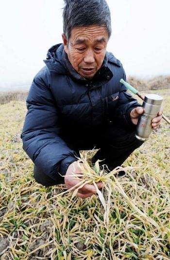 В Китае усиливается засуха, цены на зерновые повышаются