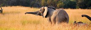 В Бельгии впервые родился слоненок