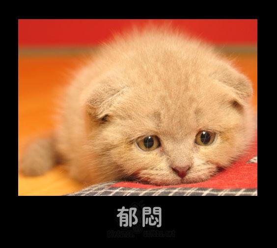 Фотообзор: Эмоции у животных