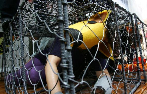 Фоторепортаж: В Южной Корее протестуют против собачатины