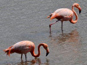 115 117 flamingo s - Эволюция - является ли отбор полностью естественным?