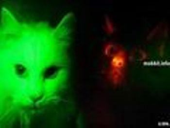 Учёные вывели светящегося кота