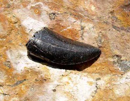 """121 shgs09042611 350 - Ученые обнаружили останки """"полярного"""" динозавра"""