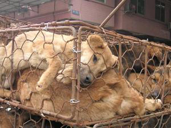 Запрет ЕС на импорт собачьего и кошачеьго меха