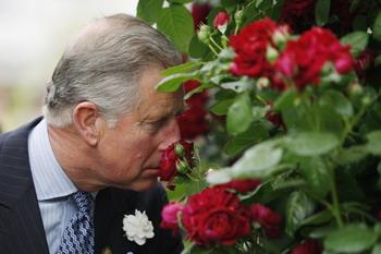 92 19 05 09 ROZA 350  - Англия: Новый сорт красной розы выведен для принца Чарльза