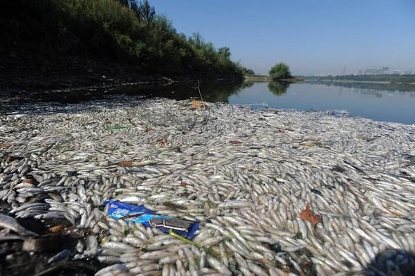 Фоторепортаж: Много погибшей рыбы плавает в реке на северо-западе Китая