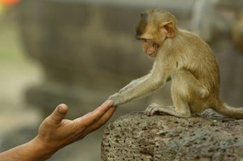 Президенту Замбии обезьяны испортили пиджак