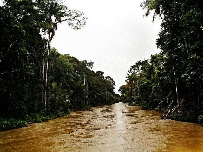 Регресс  бразильского Лесного кодекса