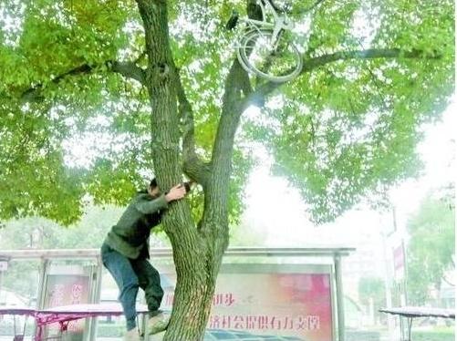 137 u91 0312 shu - Во избежание кражи китаец стал парковать велосипед на дереве