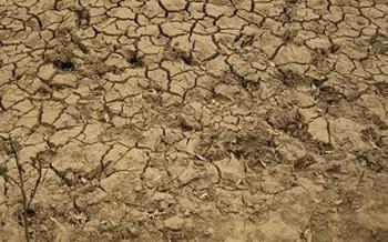 ООН: засуха в Китае может стимулировать рост мировых цен на пшеницу