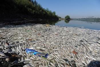 Около двух тысяч тонн рыбы погибло в реке Динцзян на юго-востоке Китая