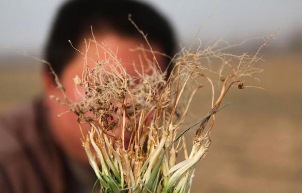 137 u91 1601 hanzai6 - В Китае продолжается засуха
