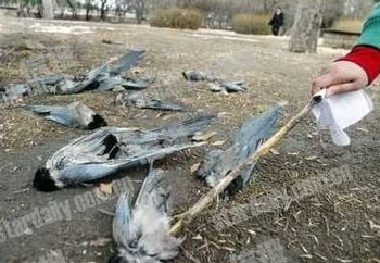 Десятки мёртвых птиц обнаружены в Пекине