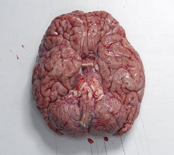 Китаец съел мозг мальчика, чтобы вылечиться от эпилепсии