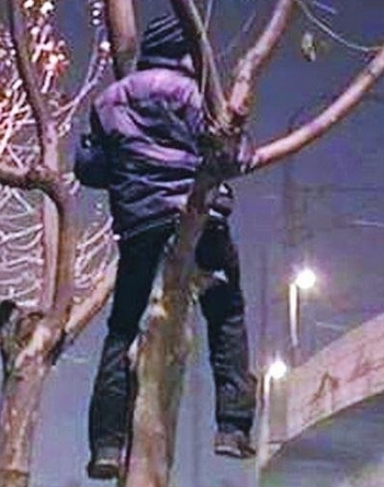 В Китае приехавший на заработки парень был вынужден поселиться на дереве