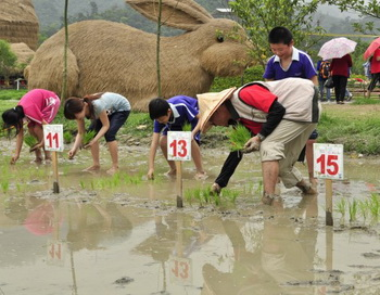 Выращивание риса с помощью утят в Тайване