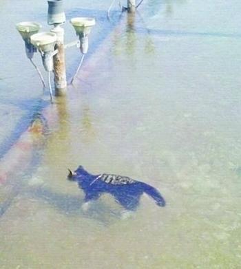 Замёрзший кот и кошачье мясо в китайской кухне