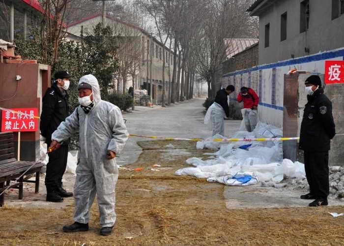 197 ChinaBirdFlu - ООН предупреждает о новой угрозе эпидемии птичьего гриппа в Китае