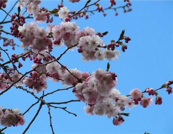 Весна в японской поэзии