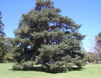 Волшебное дерево. Сказка