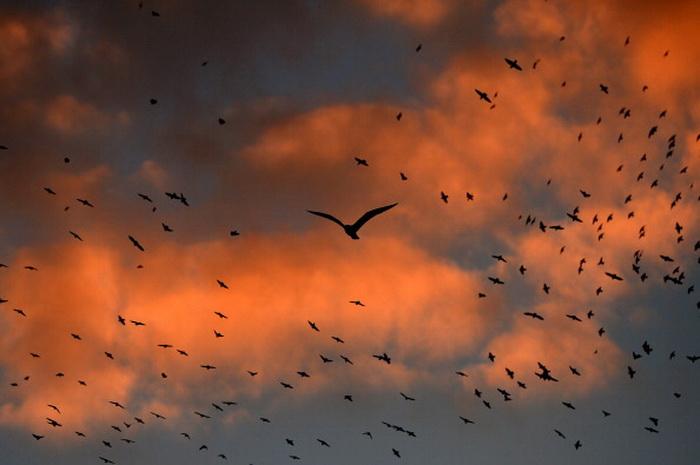 Скворцы «рисуют» картины в небе