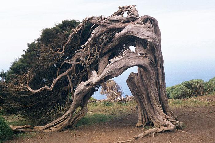 Сказочный лес острова Иерро в Испании