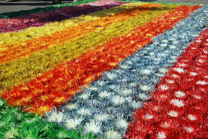 На Красной площади откроется фестиваль цветов