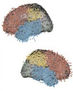 В мозгу обнаружены проводящие пути мысленного путешествия во времени