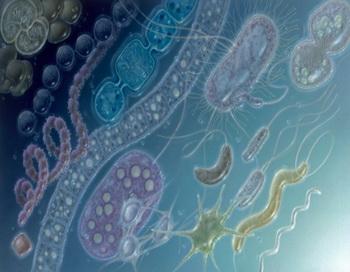 Планете грозит устойчивая к антибиотикам бактерия