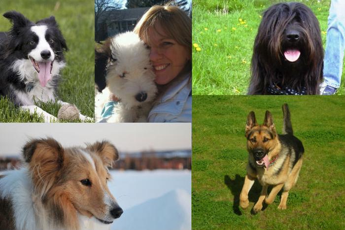 191 dogs home 02 - Порода собаки может многое рассказать о её хозяине