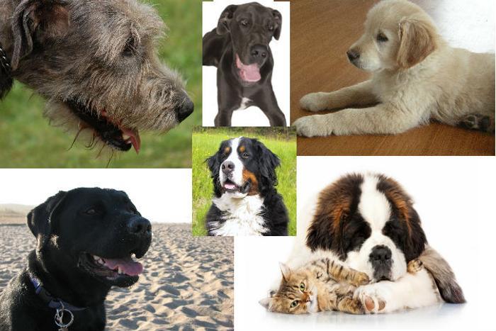 191 dogs home 03 - Порода собаки может многое рассказать о её хозяине