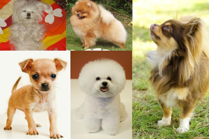 191 dogs home 05 - Порода собаки может многое рассказать о её хозяине