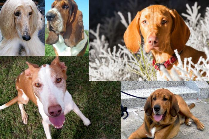 191 dogs home 06 - Порода собаки может многое рассказать о её хозяине