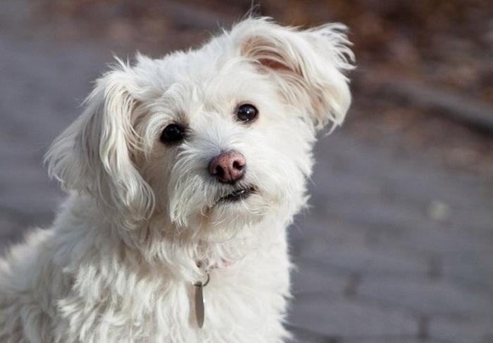 191 home 141013 4 - Собака в гармонии с окружающей средой