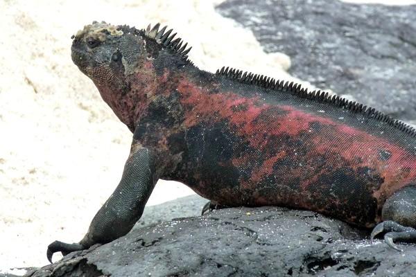 115 Galapag - Галапагосские острова - мир голубых олушей и морских львов